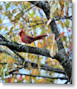 Autumn Cardinal Metal Print