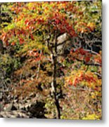 Autumn Color In Smoky Mountains National Park Metal Print