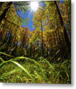 Autumn Forest Delight Metal Print