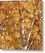 Autumn Golden Leaves Metal Print