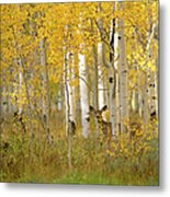 Autumn In Uinta National Forest. A Deer Metal Print
