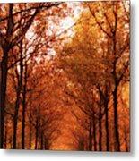 Autumn Lights At Groeneveld Metal Print