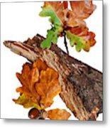 Autumn Oak Leaves And Acorns On White Metal Print