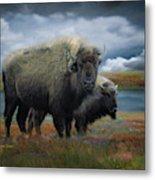 Autumn Plains Bison Metal Print