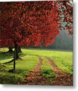 Autumn Trees In Garden Metal Print