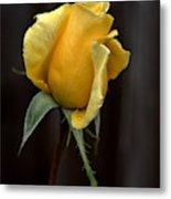 Autumn Yellow Rose Metal Print