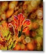Autumn's Glow 2 Metal Print