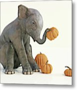 Baby Elephant And Pumpkins Metal Print