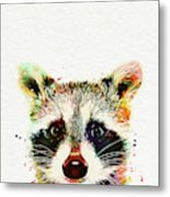 Baby Raccoon Metal Print