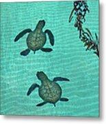 Baby Sea Turtles Metal Print