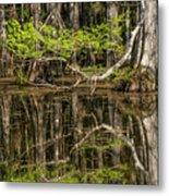 Bald Cypress Trees And Reflection, Six Metal Print
