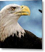 Bald Eagle And Fledgling  Metal Print