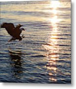 Bald Eagle At Sunset Metal Print