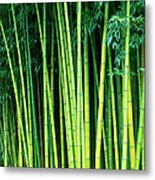 Bamboo Trees Metal Print