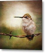 Barbed Wire Hummingbird Perch Metal Print