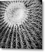 Barrel Cactus Black And White Metal Print