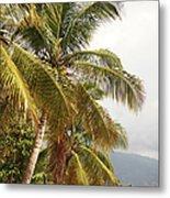 Beach In Haiti Metal Print