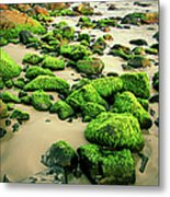 Beach Rocks Covered With Seaweed Metal Print