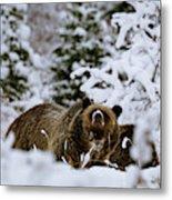 Bear In The Snow Metal Print