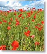 Beautiful Fields Of Red Poppies Metal Print