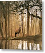 Beautiful Landscape Image Of Still Stream In Lake District Fores Metal Print