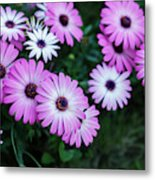 Beautiful Pink Flowers In Grass Metal Print