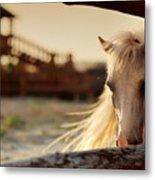 Beautiful, Quiet, White Horse Waits In Metal Print