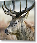 Beautiful Red Deer Stag Cervus Elaphus With Majestic Antelrs In  Metal Print