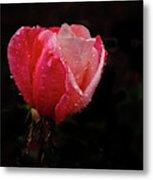 Beautiful Wet Rose Metal Print