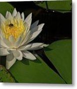 Bee In Water Lily Metal Print