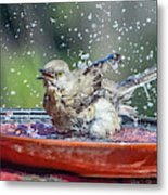 Bird In A Bath Metal Print