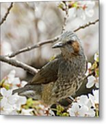 Bird Perched Among Cherry Blossoms Metal Print