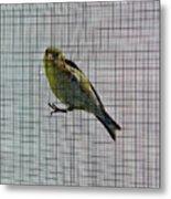 Bird Watching Reversed Metal Print