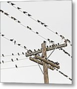Birds Perched On Wires Metal Print