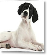 Black-and-white Pointer Pup Metal Print