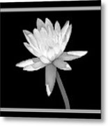 Black And White Water Lily Metal Print