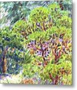Blake Garden, Berkeley Ca Metal Print