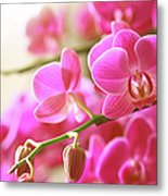 Blooming Pink Orchid On A Green Branch Metal Print