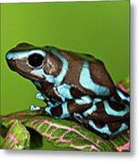 Blue And Black Dart Frog, Dendrobates Metal Print