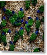 Blue-headed And Barrabands Parrots Metal Print