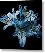 Blue Lilies Metal Print