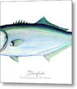 Bluefish Metal Print