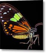 Boisduval's Tiger Moth Metal Print