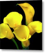 Bouquet Of Yellow Calla Lilies Metal Print