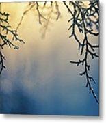 Branch Of Pine Tree Metal Print