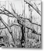 Branches In Black And White Metal Print