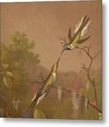 Brazilian Hummingbirds II Metal Print