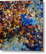 Bright Beautiful Fall Foliage Floating Metal Print