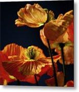 Bright Orange Poppies Metal Print