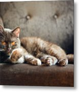 British Cat At Home Metal Print